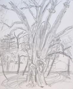 January 4 2015 4pm1857 tree Tilt farm