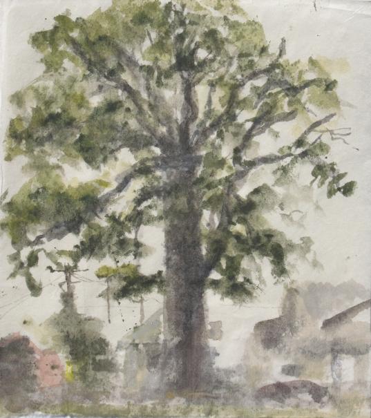 Oak on Lynn Drive